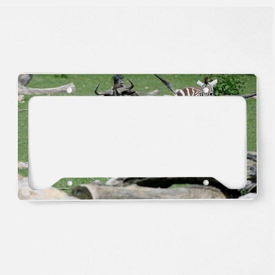 Zebra011 License Plate Holder