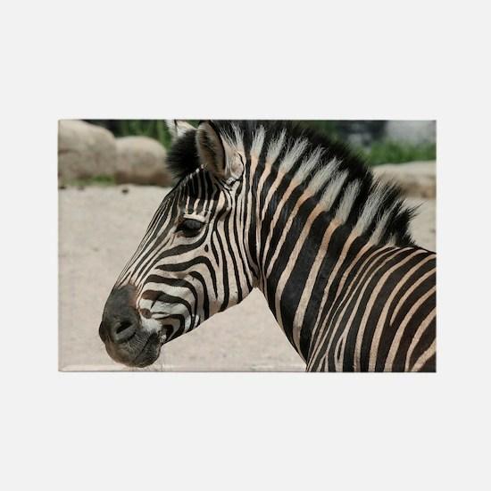 Zebra021 Rectangle Magnet