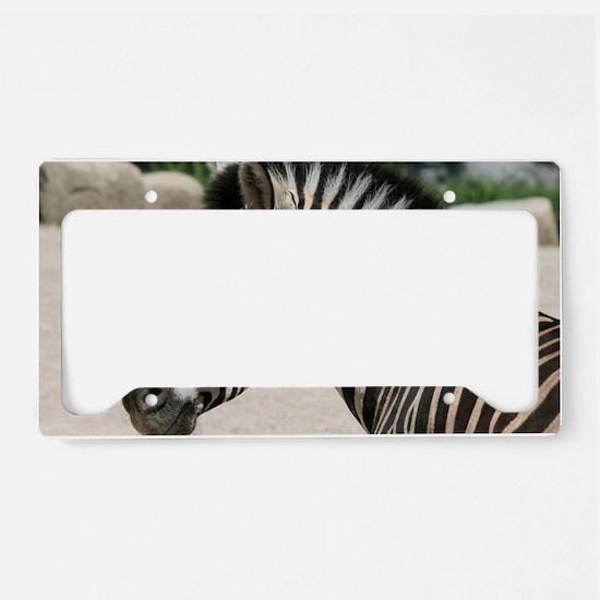 Zebra021 License Plate Holder