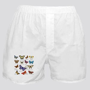 Butterfly Illustrations full colored Boxer Shorts