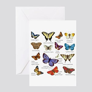 Butterfly Illustrations full colored Greeting Card