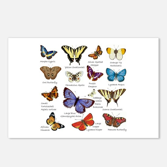 Butterfly Illustrations full colored Postcards (Pa