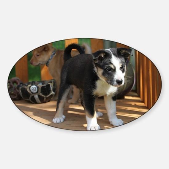 IcelandicSheepdog033 Sticker (Oval)