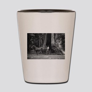 Carriage in the Hollow Tree Shot Glass