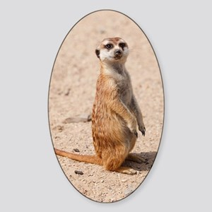 Meerkat Sticker (Oval)