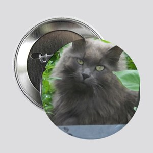 """Long Haired Russian Blue Cat 2.25"""" Button"""