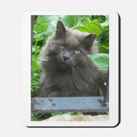 Long Haired Russian Blue Cat Mousepad