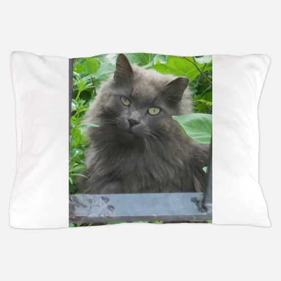 Long Haired Russian Blue Cat Pillow Case