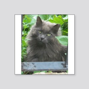 Long Haired Russian Blue Cat Sticker