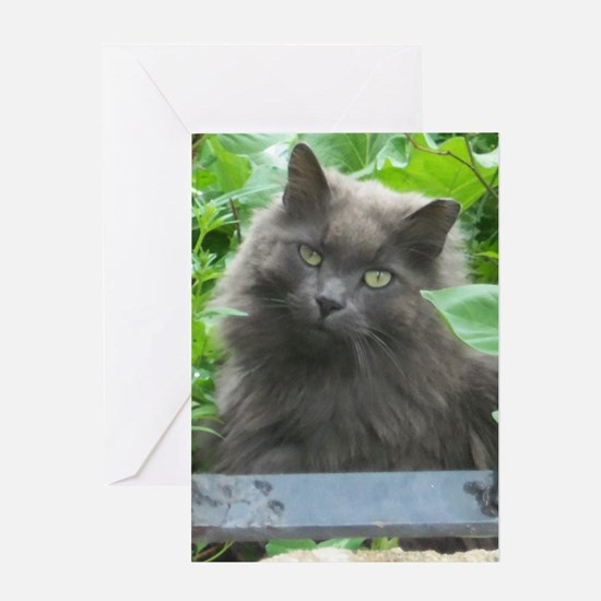 Long Haired Russian Blue Cat Greeting Cards