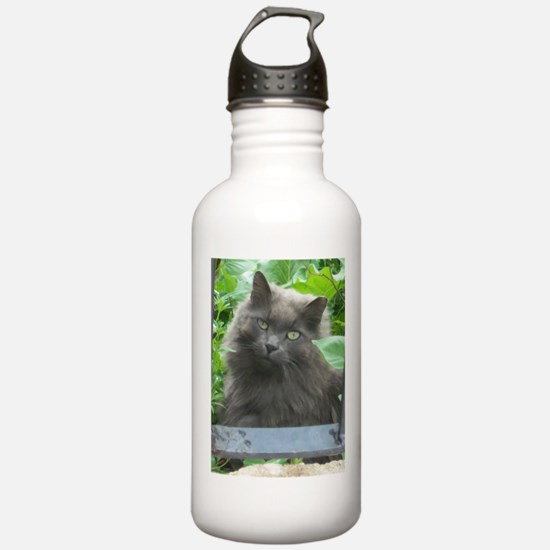 Long Haired Russian Blue Cat Water Bottle