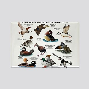 Ducks of North America Rectangle Magnet