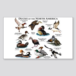 Ducks of North America Sticker (Rectangle)