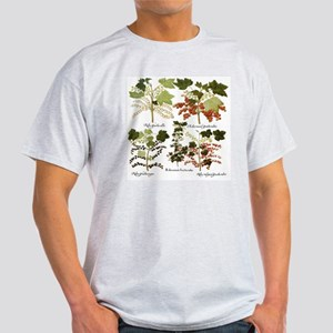 Vintage Currants by Basilius Besler Light T-Shirt