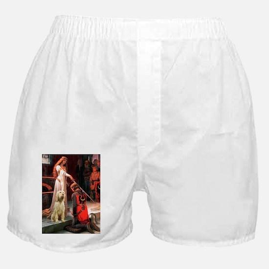 MP-ACCOLADE-Spinone 5.png Boxer Shorts
