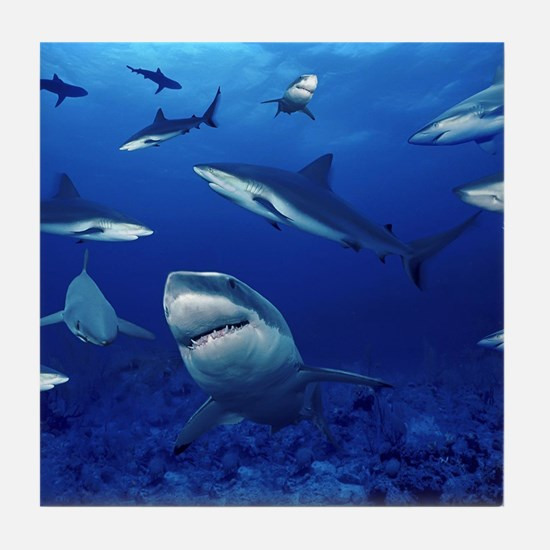 Sharks! Tile Coaster