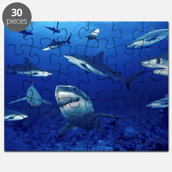Sharks! Puzzle