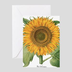 Vintage Sunflower Basilius Besler Greeting Card