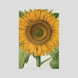 Vintage Sunflower Basilius Besler Rectangle Magnet
