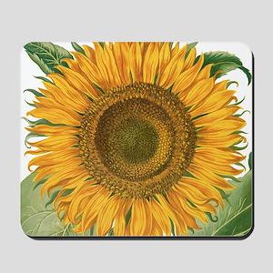 Vintage Sunflower Basilius Besler Mousepad