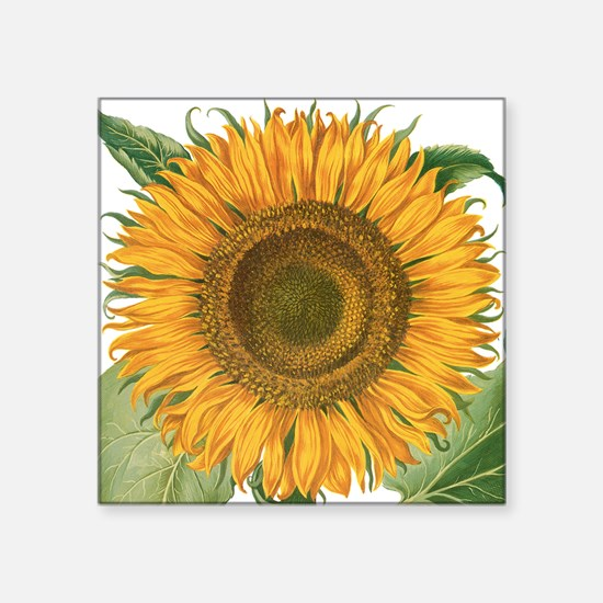 "Vintage Sunflower Basilius  Square Sticker 3"" x 3"""