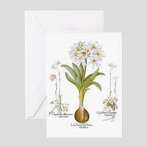 Vintage Flowers by Basilius Besler Greeting Card
