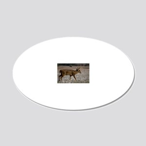 Whitetail in Cades Cove 20x12 Oval Wall Decal