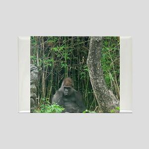 Thinking Gorilla Magnets