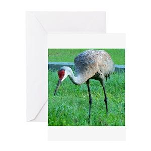 Crane greeting cards cafepress m4hsunfo
