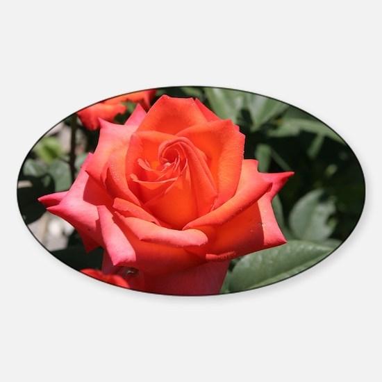 Red Hybrid Tea Rose Sticker (Oval)