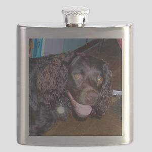 american water spaniel Flask