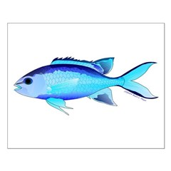 Blue Chromis Posters