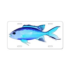 Blue Chromis Aluminum License Plate