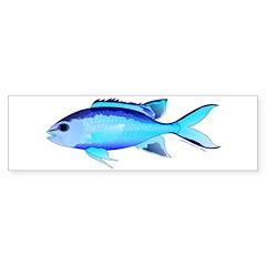 Blue Chromis Bumper Bumper Sticker