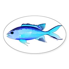 Blue Chromis Decal
