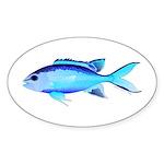 Blue Chromis Sticker