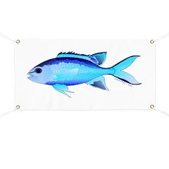 Blue Chromis Banner