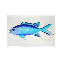 Blue Chromis Magnets