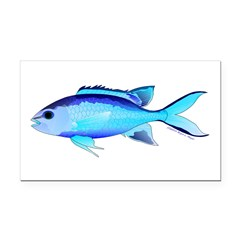 Blue Chromis Rectangle Car Magnet