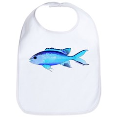 Blue Chromis c Bib