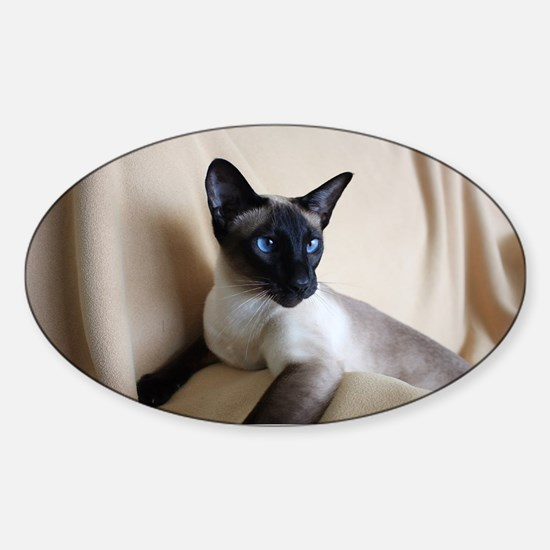 Seal Point Siamese Cat Blue Eyes Sticker (Oval)