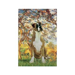 Spring with a Boxer Rectangle Magnet
