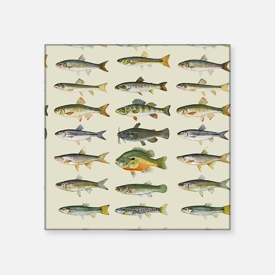 Freshwater Fish Chart Sticker
