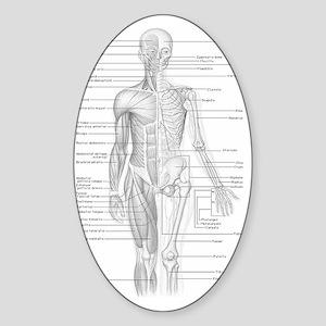 Dr Human Body Sticker (Oval)