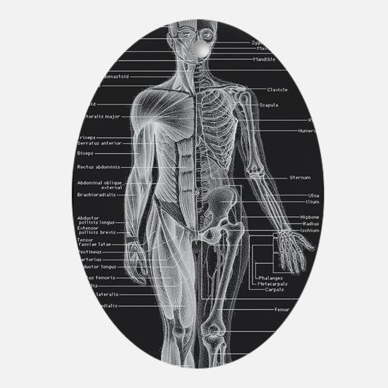 Dr Human Body Oval Ornament
