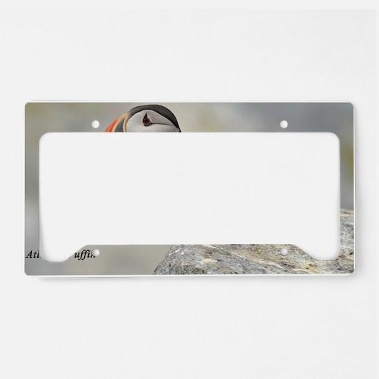 11x17_print 7 License Plate Holder