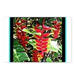 Hawaiian Torch Heliconia lower Postcards (Package