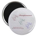 Phosphonosect Molecule Magnet
