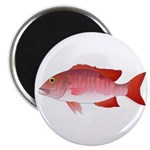 Red Snapper Magnets