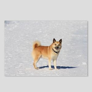 Icelandic Sheepdog 043 Postcards (Package of 8)